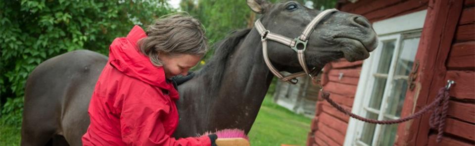 Sosiaalipedagoginen hevostoiminta